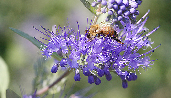 20170129 Bee
